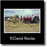 Threshing rice with tractor